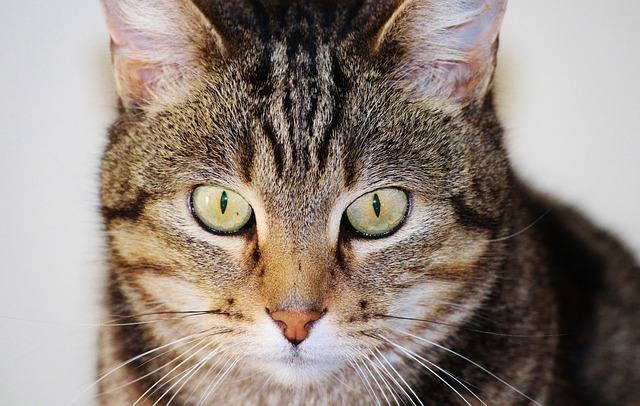 cat-443678_640